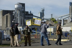 ilwu_local_4_picket_united_grain1-600x399
