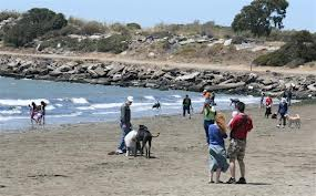 albany-bulb-dogs-beach