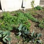 cmty-garden-3-8-15